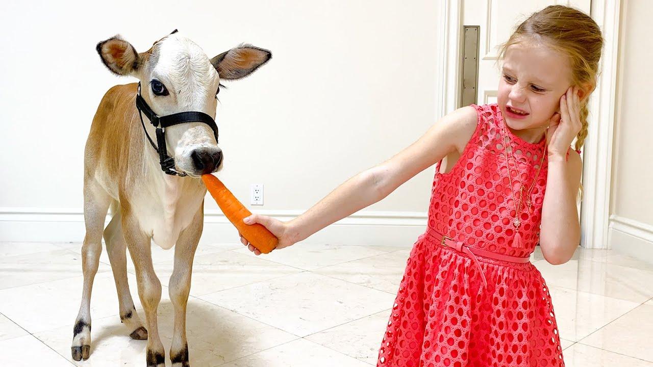 Nastya chooses a new pet