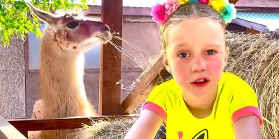 Nastya studies who alpacas are and takes care of animals. Useful video for children